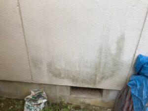 外壁にカビが発生して困っています。何か良い対策はないでしょうか?