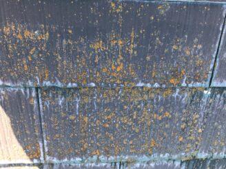 多見市で屋根外壁塗装 現調時 下見 家の状態  屋根の状態 塗り替え前 カビ コケ かび 苔
